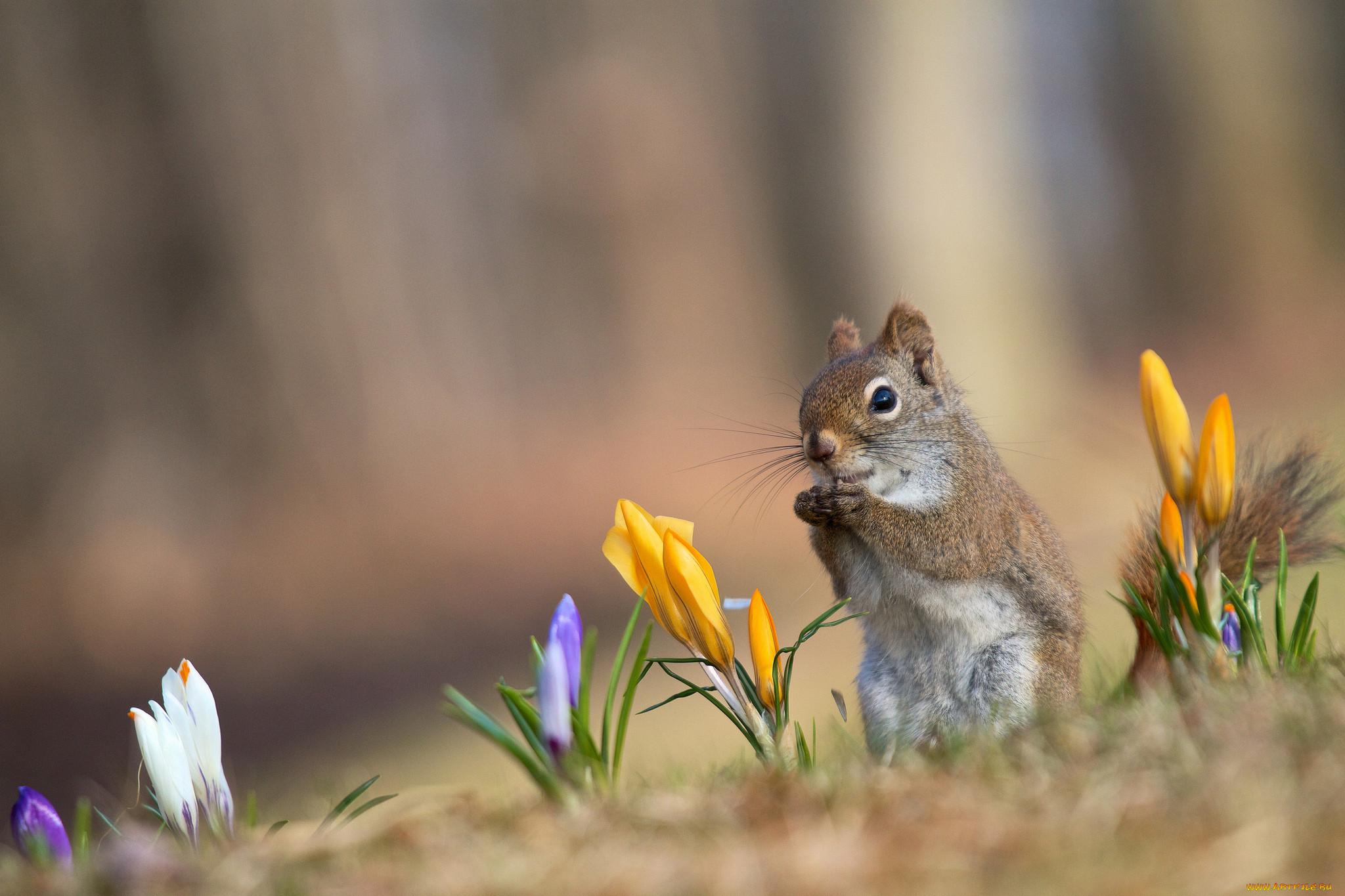 лучшие фотографы весна конечно же, вас